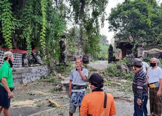 Nusabali.com - hujan-sehari-3-pohon-tumbang