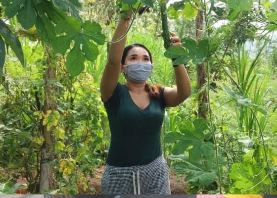 Nusabali.com - kwt-hidupkan-kebun-keluarga