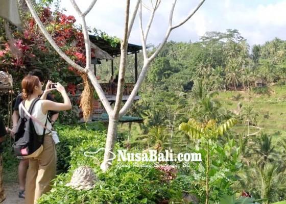 Nusabali.com - perda-plp2b-rentan-mubazir