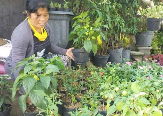 Nusabali.com - tanaman-hias-dan-bibit-sayur-jadi-obat-bosan-selama-pandemi