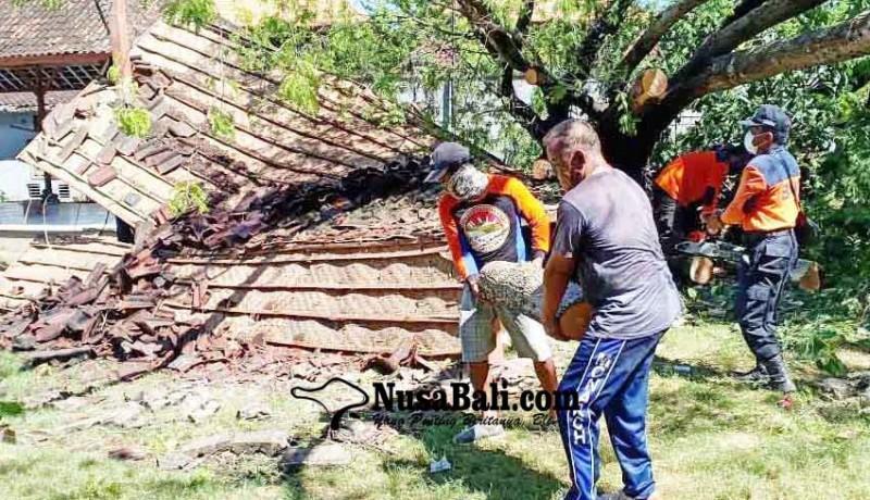 www.nusabali.com-pohon-tumbang-timpa-palinggih-dan-bale-pawedaan