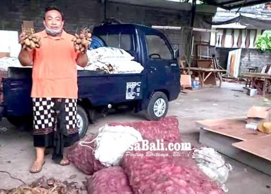 Nusabali.com - anggota-dpr-ri-borong-tiga-ton-ketela-dari-petani