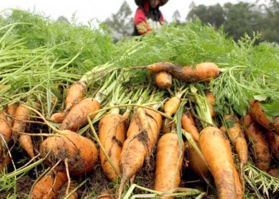 Nusabali.com - sayuran-berlimpah-dan-bisa-diekspor