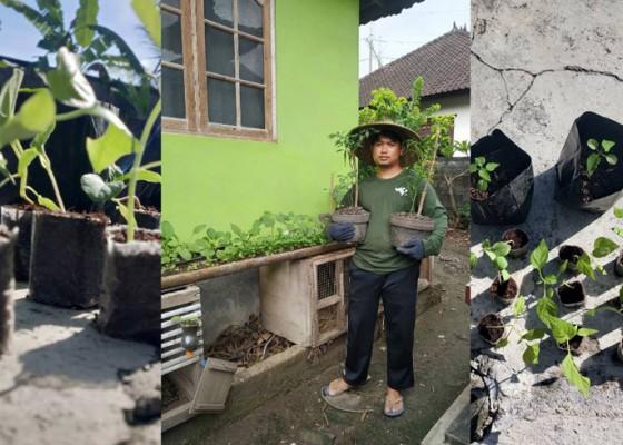 Nusabali.com - berkebun-hobi-baru-ala-rumahan-di-masa-pandemi