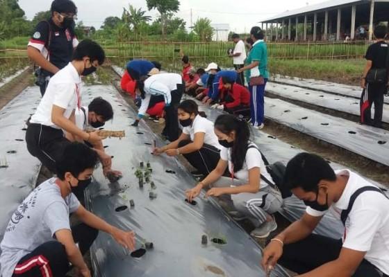 Nusabali.com - pkk-jbk-sumbang-500-bibit-tanaman