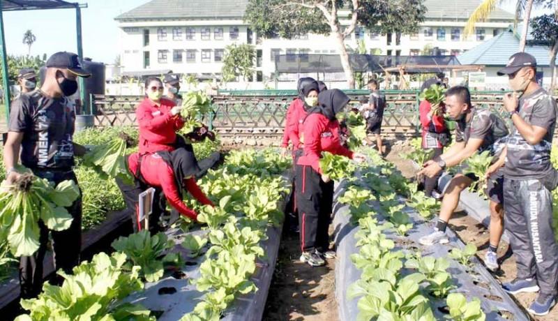 www.nusabali.com-yonif-mekanis-gn-sulap-lahan-gersang-jadi-agrowisata