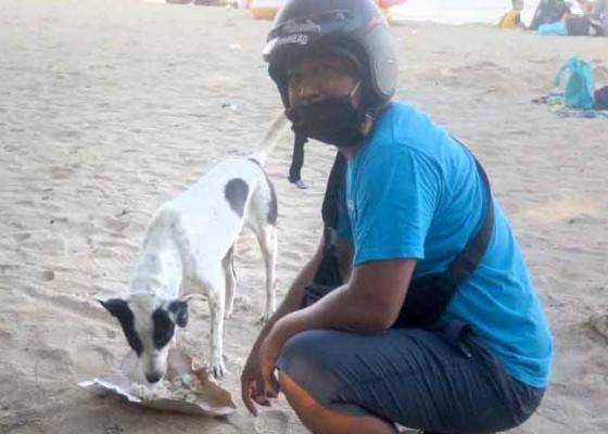 Nusabali.com - karang-taruna-peduli-anjing-kelaparan