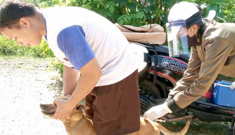 www.nusabali.com-kuluk-rabies-gigit-9-warga-di-mendoyo-dauh-tukad