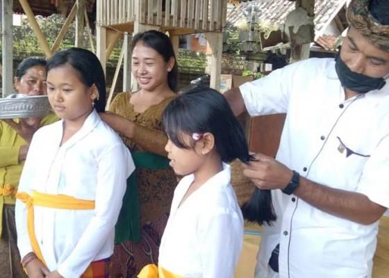 Nusabali.com - rambut-gadis-suci-dipotong-untuk-ngodakin-sesuhunan