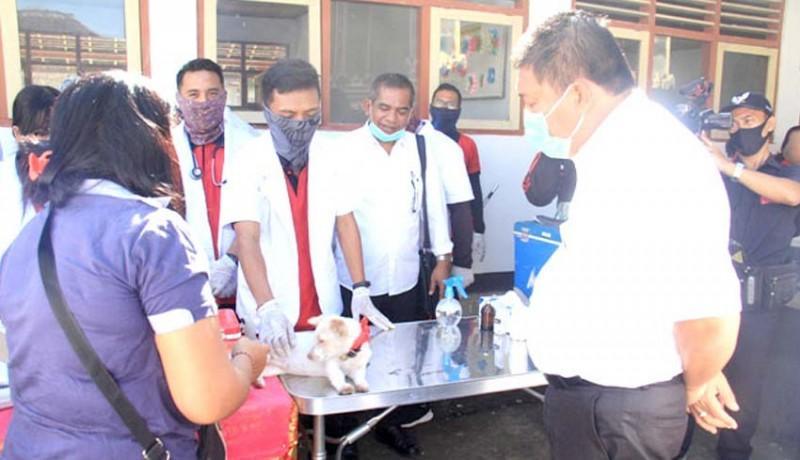 www.nusabali.com-2-kasus-rabies-di-mendoyo-dauh-tukad-target-vaksinasi-825-ekor-anjing