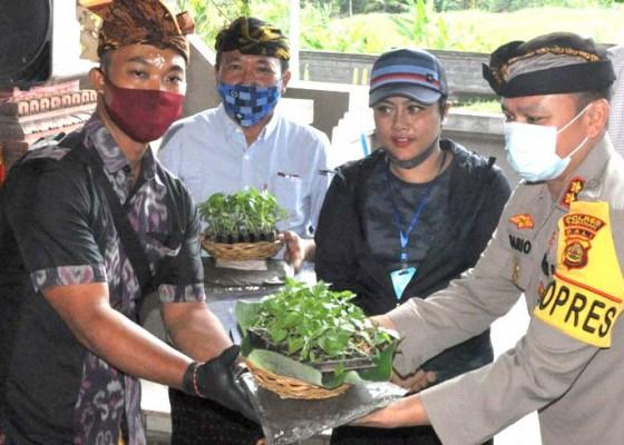 Nusabali.com - bupati-eka-bagikan-1-ton-beras-cpp-dan-133-ribu-bibit-cabai-kepada-warga