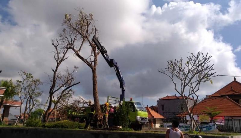 www.nusabali.com-pohon-pindahan-di-rth-kebo-iwa