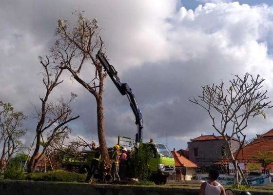 Nusabali.com - pohon-pindahan-di-rth-kebo-iwa