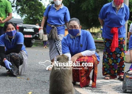 Nusabali.com - bkow-bali-bawa-buah-untuk-kera-alas-kedaton