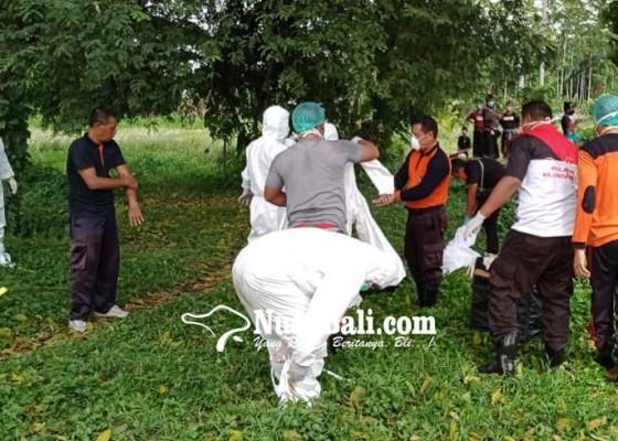Nusabali.com - dikubur-berprotokol-kesehatan-covid-19