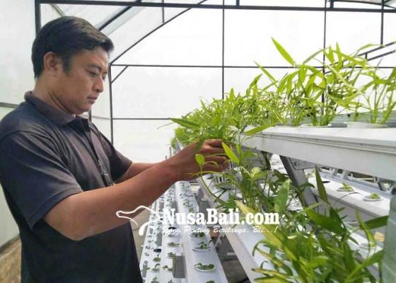 Nusabali.com - tetap-produktif-dengan-berkebun-hidroponik