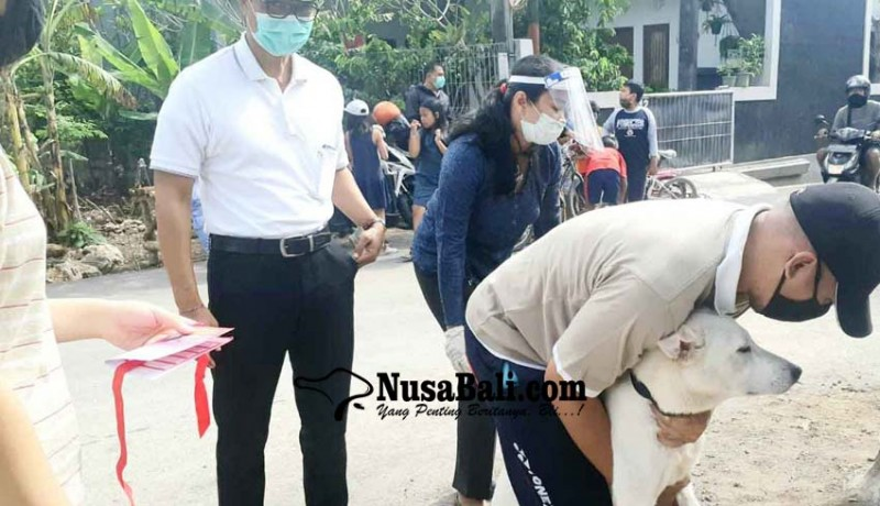 www.nusabali.com-15-ribu-anjing-liar-di-kutsel-jadi-target-vaksinasi-massal
