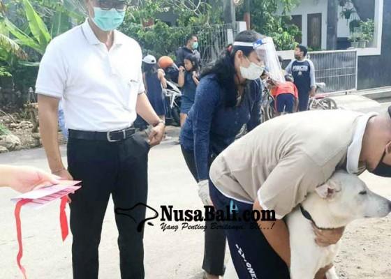Nusabali.com - 15-ribu-anjing-liar-di-kutsel-jadi-target-vaksinasi-massal