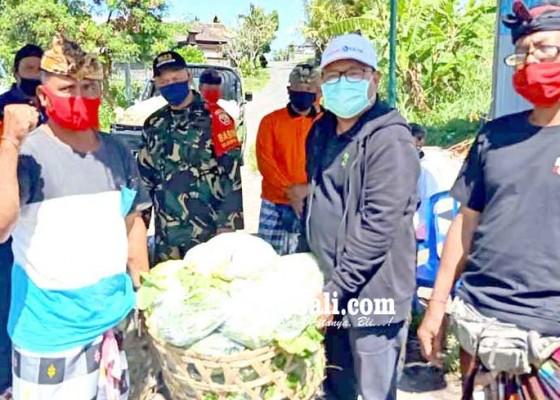 Nusabali.com - warga-cegeng-karantina-mandiri-dinas-pertanian-bantu-sayur