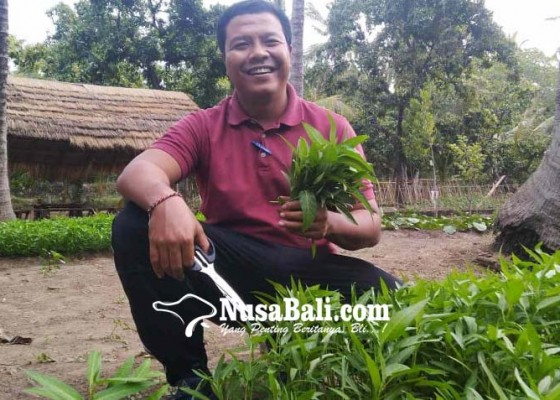 Nusabali.com - desa-tembok-bikin-kebun-pangan-libatkan-warganya-yang-terdampak-pandemi