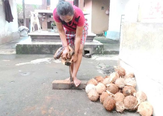 Nusabali.com - pembuat-lengis-tanusan-terus-berkurang