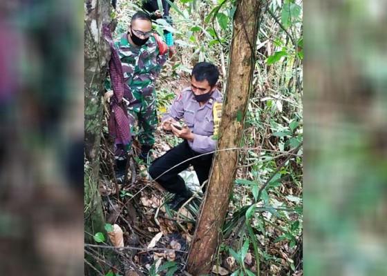 Nusabali.com - tulang-manusia-ditemukan-di-bawah-pohon-cokelat