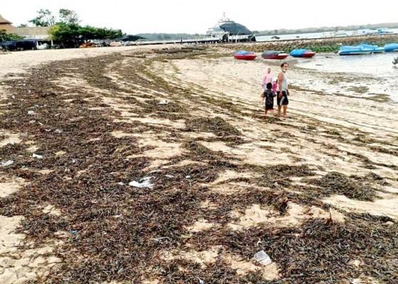 Nusabali.com - dinas-lhk-tidak-tambah-petugas-kebersihan-walau-pantai-sudah-dibuka