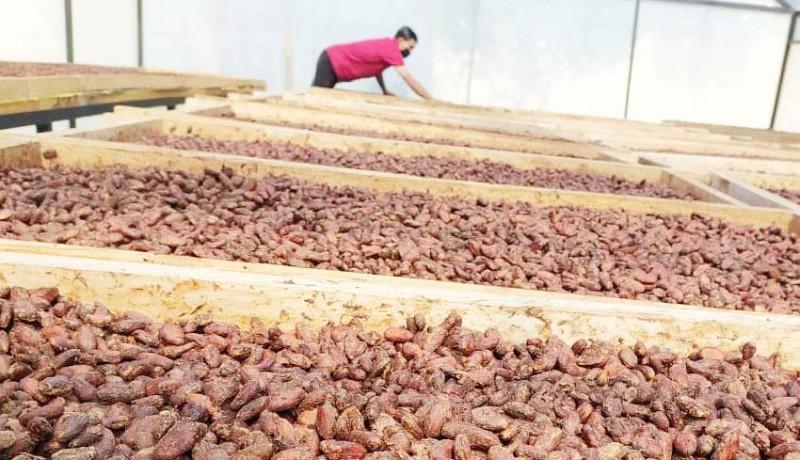 www.nusabali.com-genjot-kakao-bali