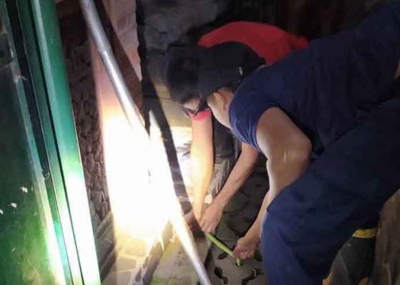 Nusabali.com - petugas-damkar-evakuasi-ular-hijau