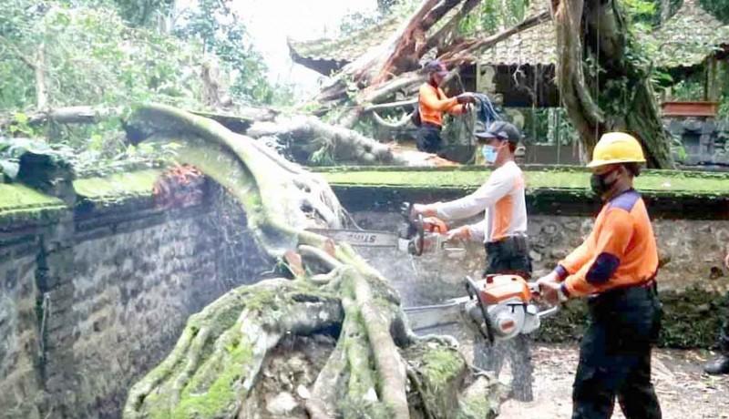 www.nusabali.com-pohon-tumbang-timpa-palinggih-pura-subak