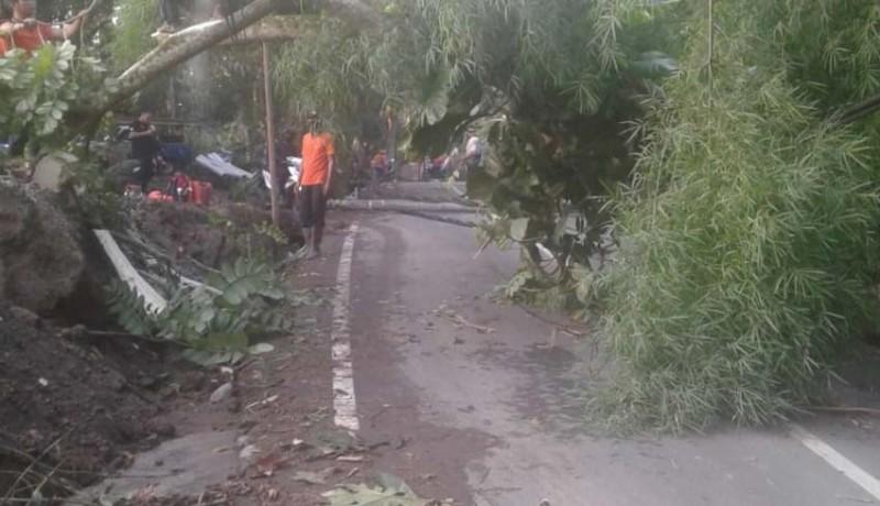 www.nusabali.com-bpbd-minta-perbekel-atensi-pohon-potensi-tumbang