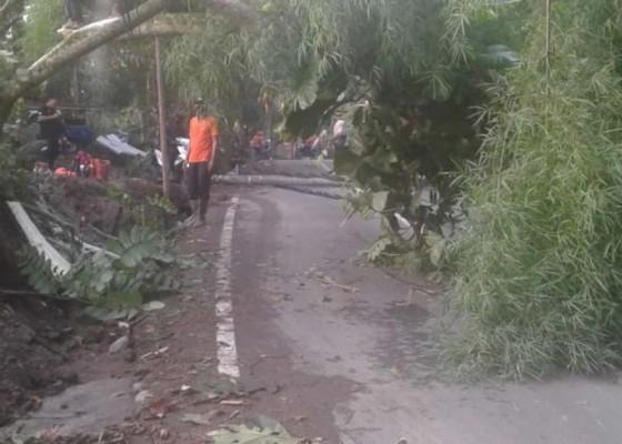 Nusabali.com - bpbd-minta-perbekel-atensi-pohon-potensi-tumbang