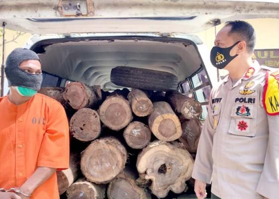 Nusabali.com - angkut-37-batang-kayu-ilegal-2-warga-kelatakan-diamankan