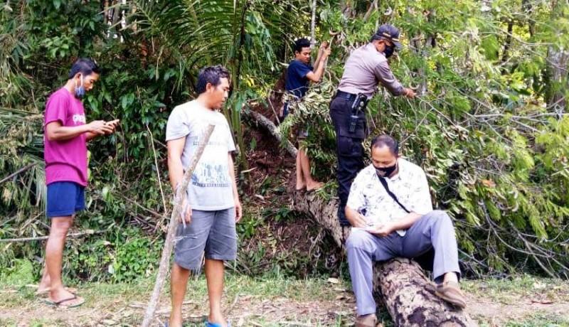 www.nusabali.com-penebang-kayu-tewas-tertimpa-batang-pohon