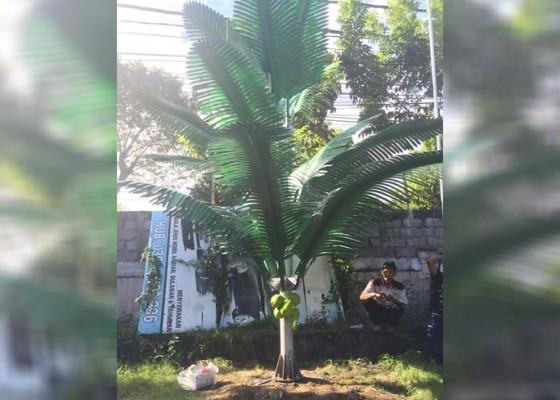 Nusabali.com - pasang-cctv-dengan-kamuflase-pohon-kelapa