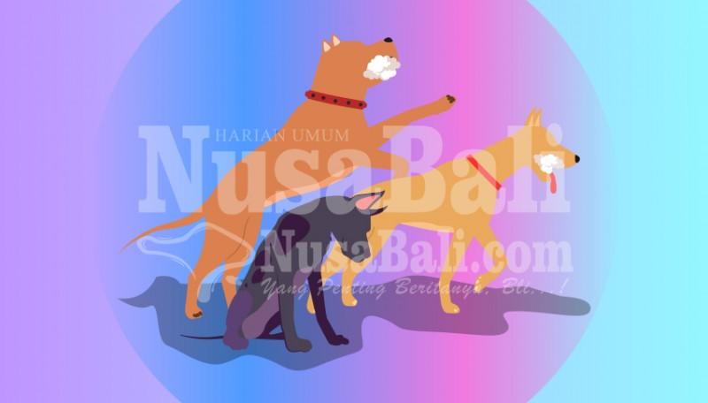 www.nusabali.com-anjing-piaraan-gigit-majikan-positif-rabies