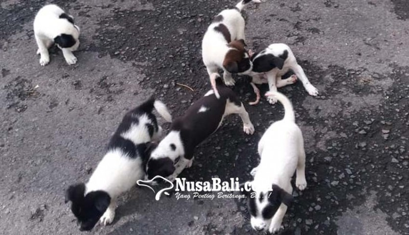 www.nusabali.com-dharma-wigata-landasan-suci-eliminasi