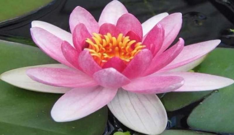 www.nusabali.com-lentera-tenang-tenang-dan-tenang