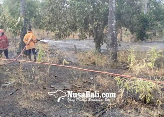 Nusabali.com - 25-pohon-mangga-terbakar
