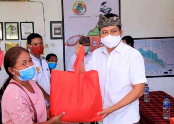 Nusabali.com - petani-kakao-diingatkan-patuhi-protokol-kesehatan