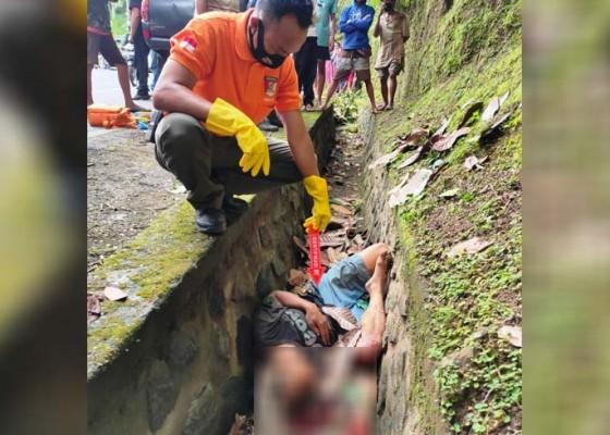 Nusabali.com - penebang-pohon-tewas-terjatuh