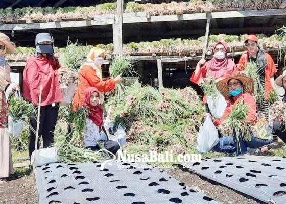 Nusabali.com - bawang-luar-terganjal-bawang-lokal-kuasai-pasaran
