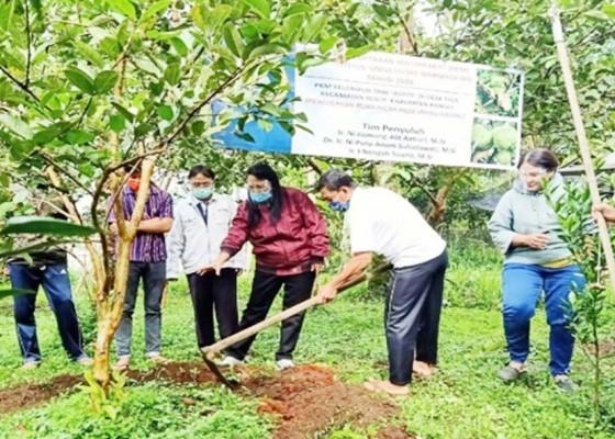 Nusabali.com - fakultas-pertanian-universitas-warmadewa-gelar-pkm