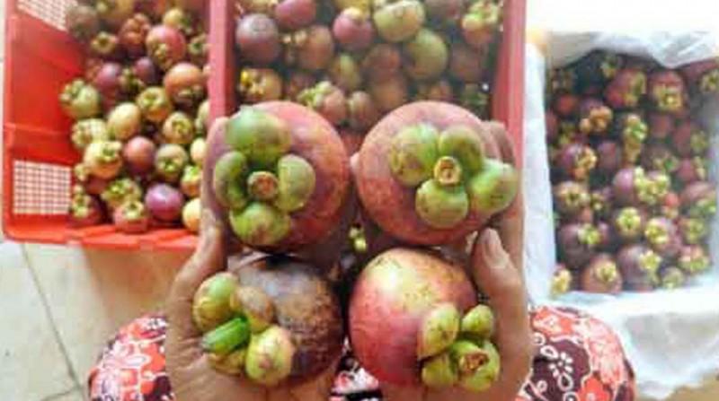 www.nusabali.com-buah-bisa-bantu-pertumbuhan-ekonomi
