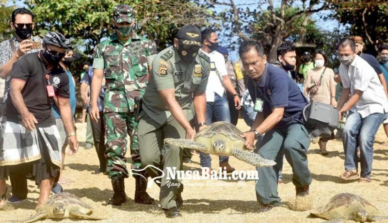 www.nusabali.com-8-penyu-hijau-dan-200-tukik-dilepas-di-pantai-sindhu