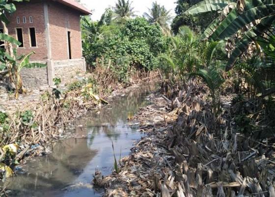 Nusabali.com - pabrik-ikan-buang-limbah-ke-sungai-warga-protes