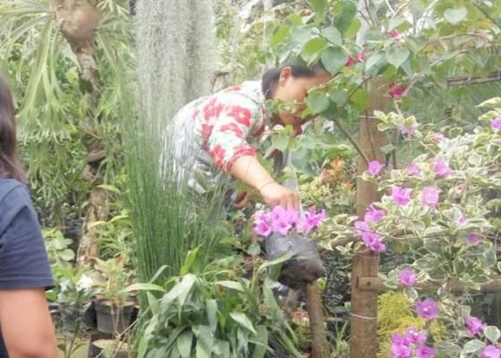 Nusabali.com - isi-waktu-jualan-tanaman-hias