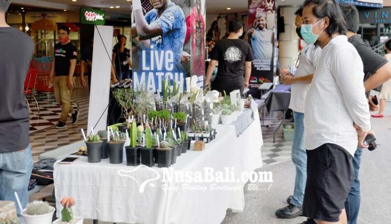www.nusabali.com-beragam-kaktus-dan-sukulen-dipamerkan-di-lippo-mall-kuta