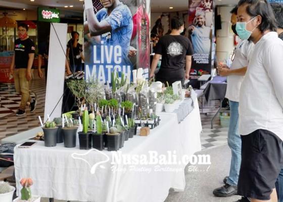 Nusabali.com - beragam-kaktus-dan-sukulen-dipamerkan-di-lippo-mall-kuta