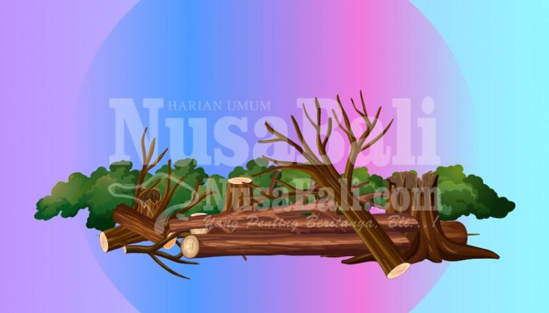 www.nusabali.com-dlhk-intensifkan-perompesan-antisipasi-pohon-tumbang